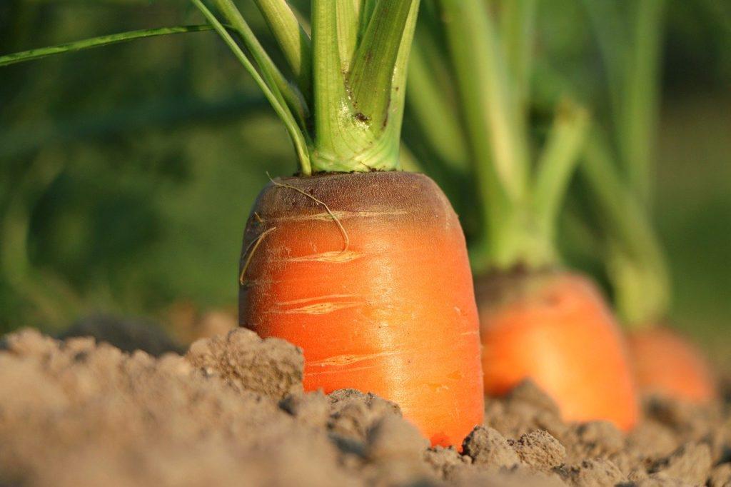 Beta carotene is a precursor to vitamin A.